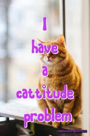 Cat Captions