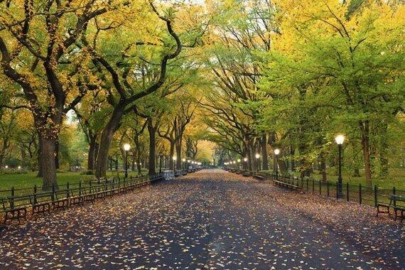 Central Park Captions