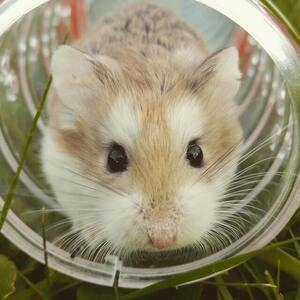 Hamster Captions